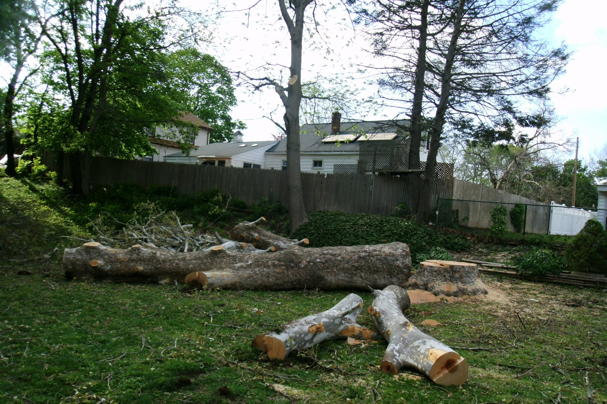 Tree Removal | Large Tree In Pieces